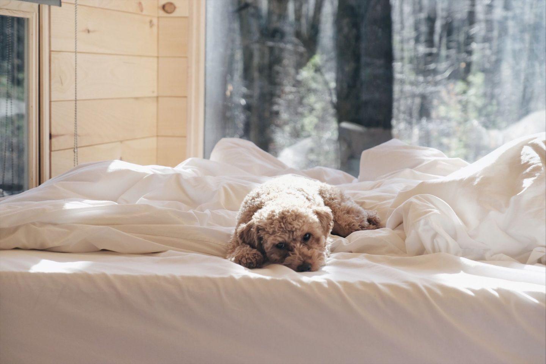 ningo toy poodle getaway house