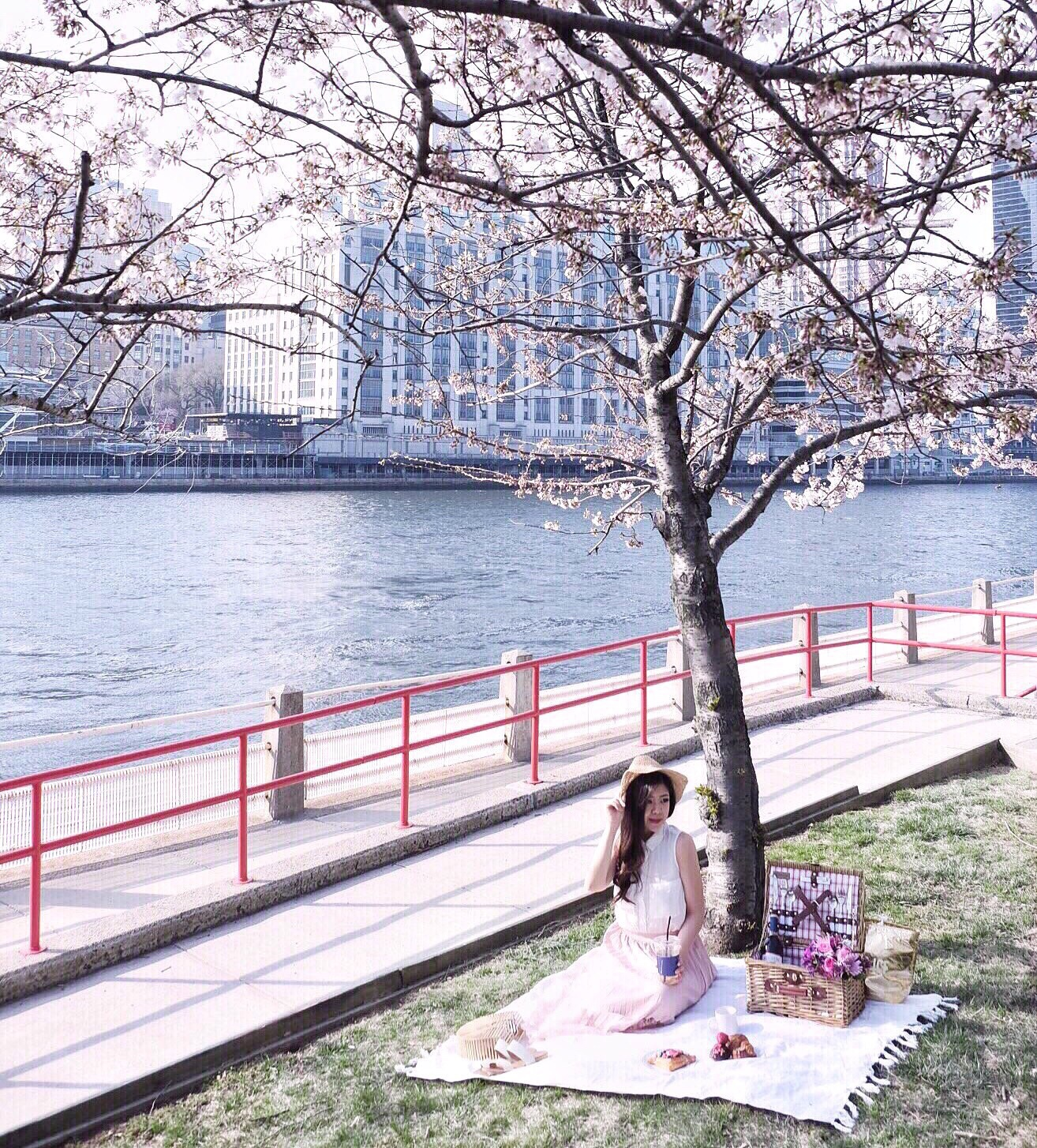roosevelt island cherry blossoms picnic
