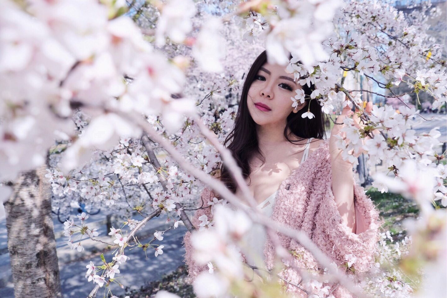 blogger babe cherry blossoms