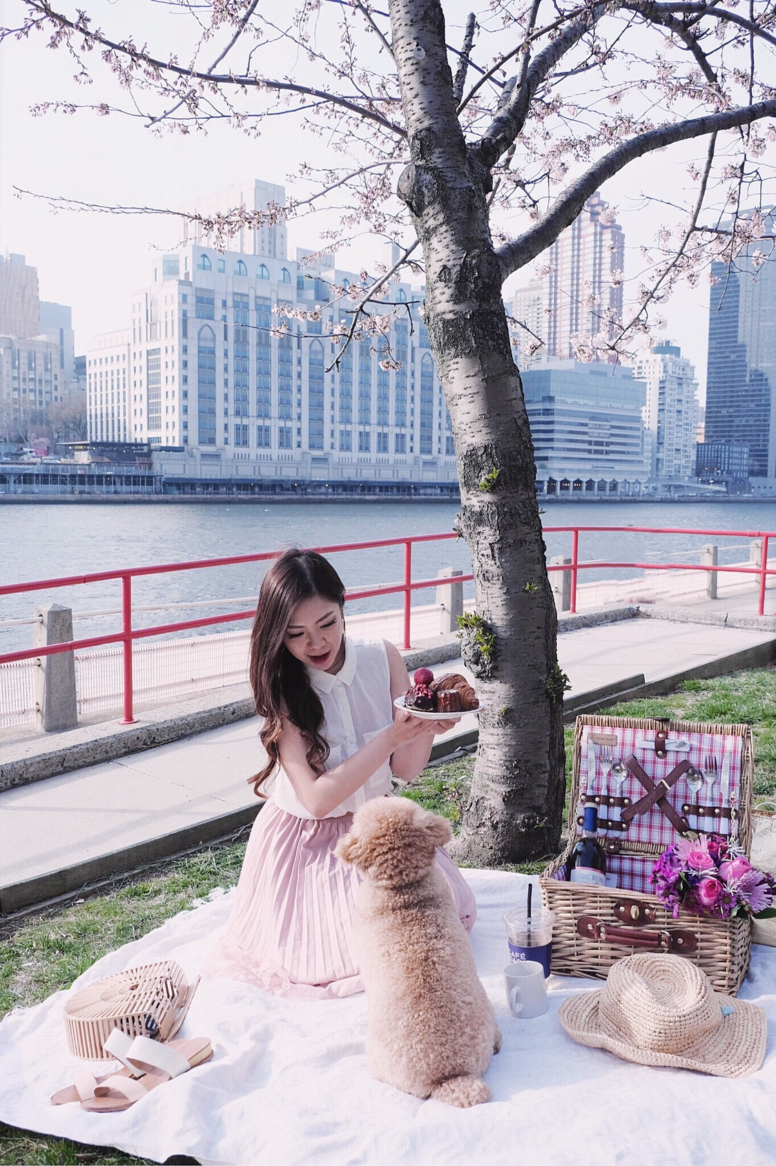 roosevelt island cherry blossom viewing picnic pup